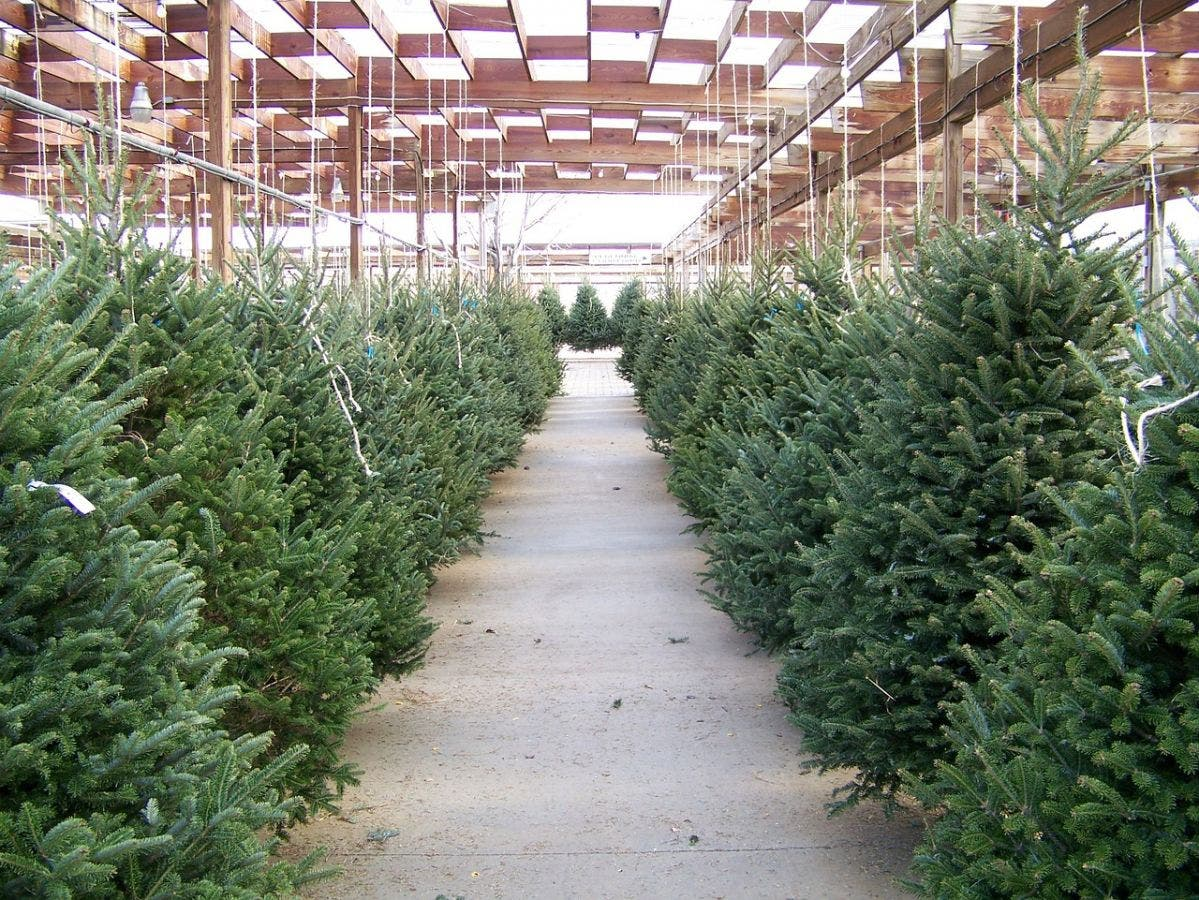 The Y's Annual Christmas Tree Lot