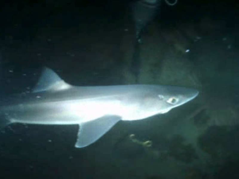 Dogfish Sharks Wash Up On Absecon Island Beaches
