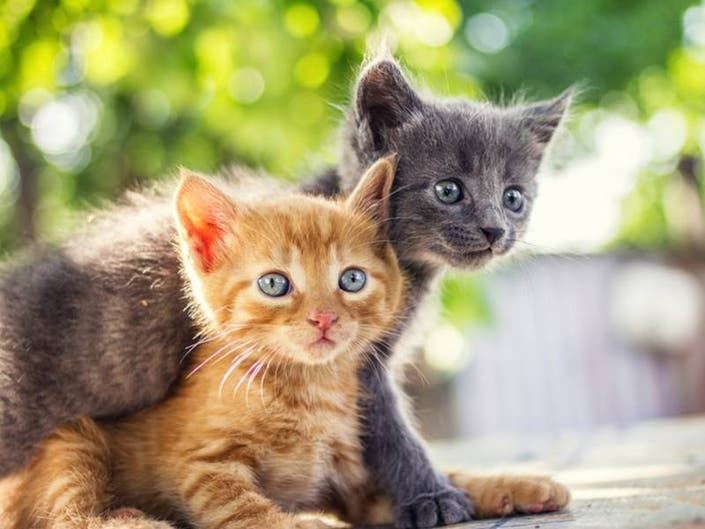 Kitten Shower For Cat Rescues Coming To Beachwood
