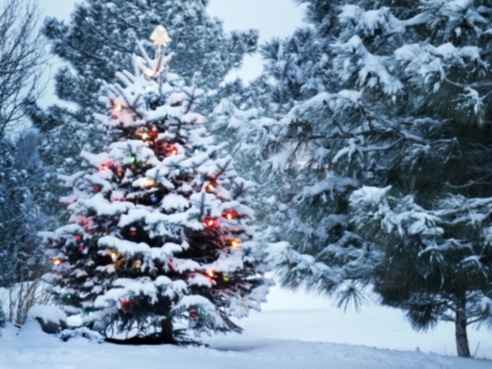 Chances Of White Christmas In Nj 2021 Will New Jersey Have A White Christmas In 2020 Chatham Nj Patch