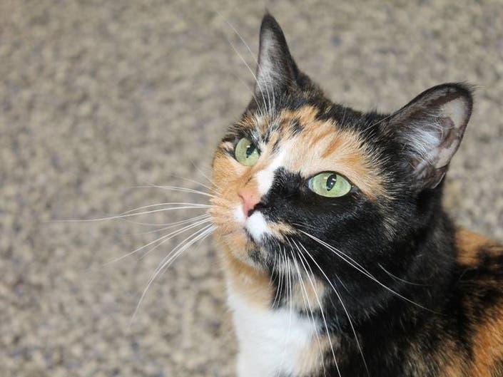 Adoptable Pet Spotlight: Peanut