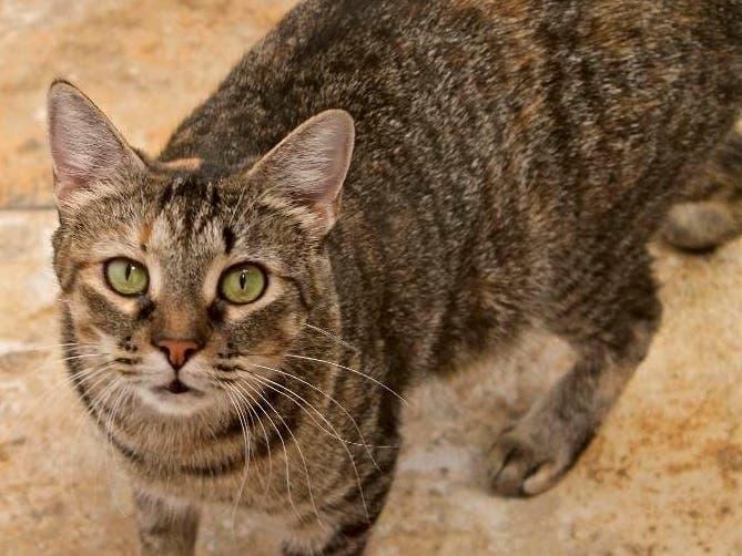 Adoptable Pet Spotlight: Candy