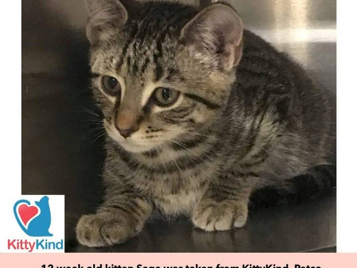 Kitten Named Sage Stolen From Union Square Pet Store