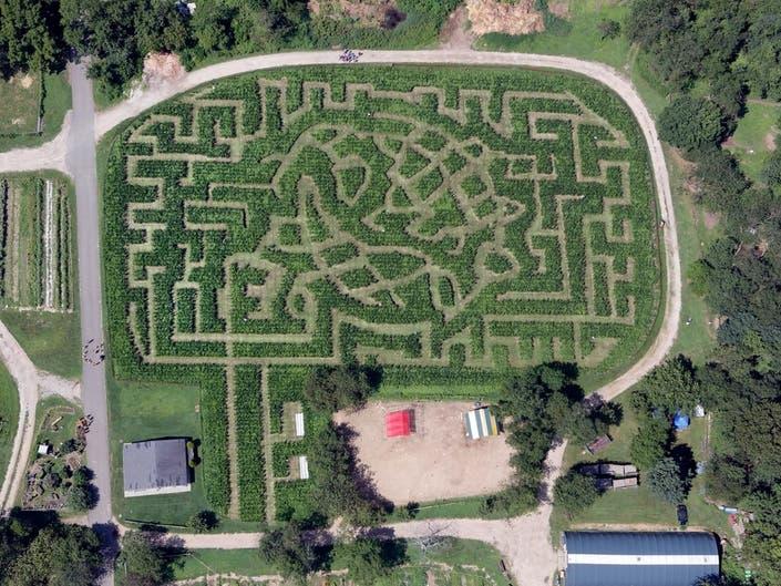 The Queens County Farm Museum's Unisphere-shaped corn maze.