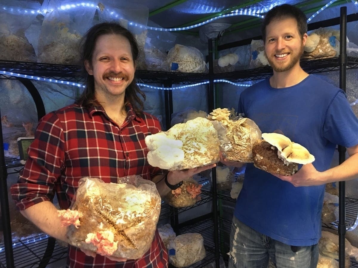 Forest Hills Brothers Launch Gourmet Mushroom Farm In Queens