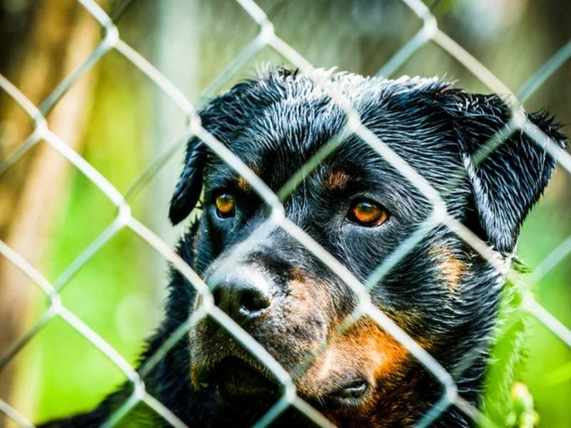 Animal-Cruelty Prevention Bills Gain Steam In NH Legislature