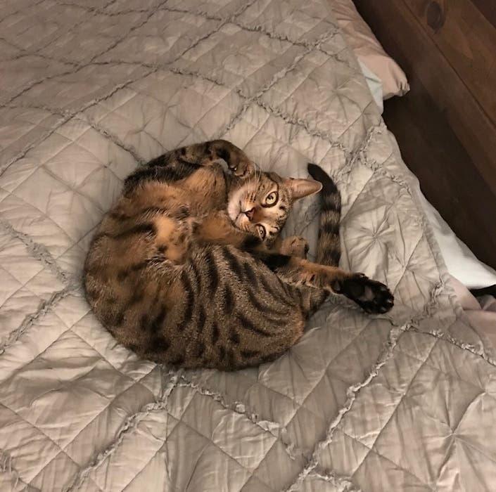 Alpharetta Cat A Finalist In Nationwide Insurance Contest