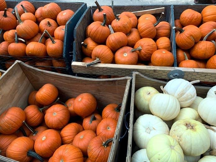 Woodstock Halloween Events 2020 Best Woodstock Area Pumpkin Patches 2020 | Woodstock, GA Patch