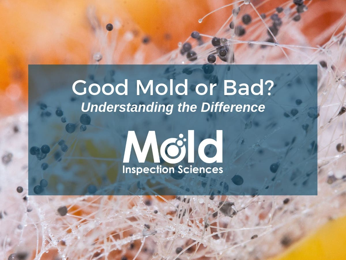 How To Tell Good Mold Or Bad