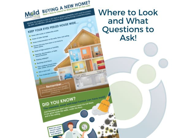 Ing A New Home Here S How To Check For Mold Before It Too