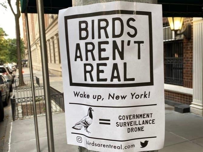 birdsarentreal___21154403852.jpg