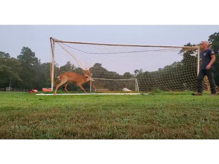 ICYMI: Man Rescues Deer Trapped In Soccer Net: VIDEO
