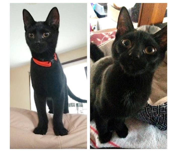 Northport Adoptable Pets Of The Week: Anchovy & Mussel