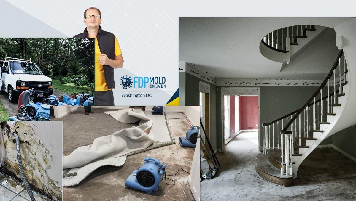 Mold Remediation Services - Sunshine Carpet
