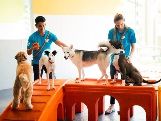 Dog Daycare Is Back Dogtopia In Miramar Safely Reopens For Pups