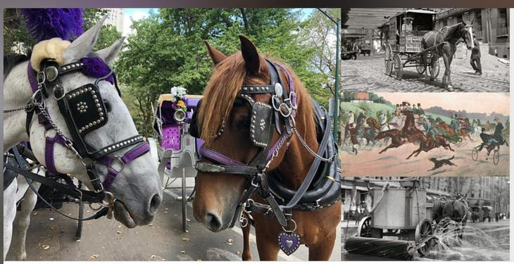 400 Years of Horse Power: The Engine That Built NYC Interactive W