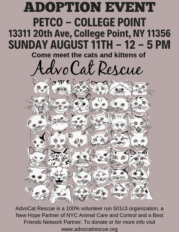 Aug 11 | Adoption Event with AdvoCat Rescue - Petco College Point