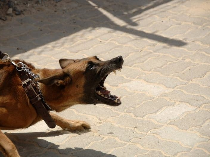 Top 10 Most Dangerous Dog Breeds in the World : Dogs