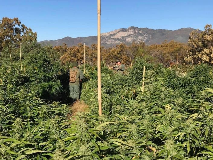 12 Tons Of Pot Seized In Illegal Grow East Of Temecula: Police