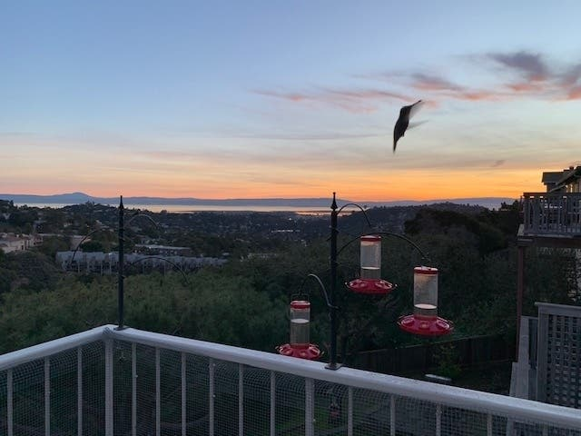 Hummingbird At Sunrise: Belmont Photo Of The Week
