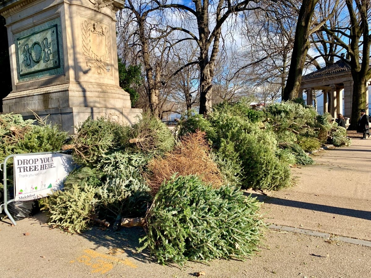 Here S Where To Drop Your Christmas Tree In The West Village West Village Ny Patch