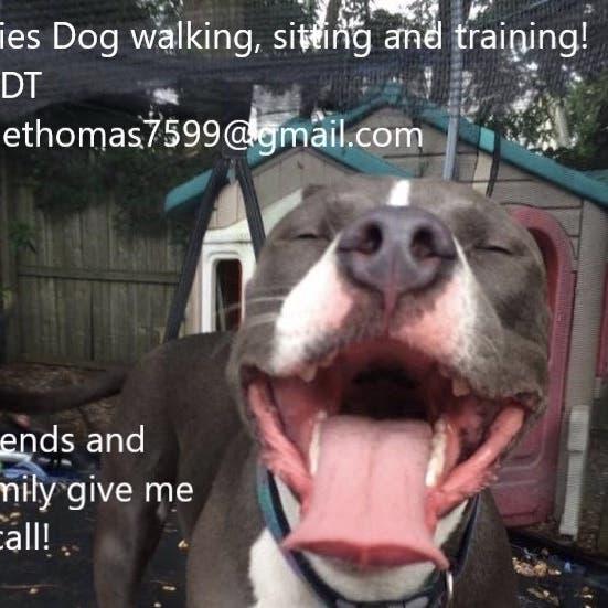 Julie Thomas's Dog Sitting, Training And Walking Service