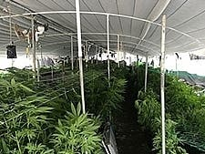 Large Pot Grow Discovered After Crews Respond To Fire: RivCo