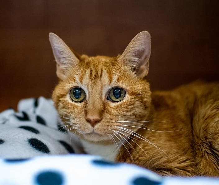 Animal Welfare League Plans Birthday Party For 21-Year-Old Cat