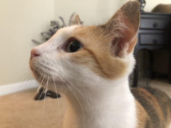Pet Of The Week Adopt Little Darling Darla Arlington Va Patch