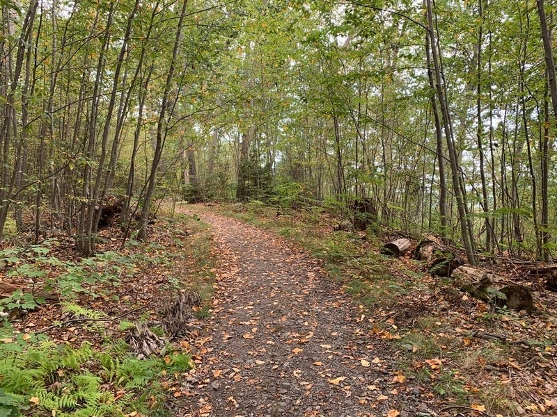 Best Hiking Trails In Reston Area To See The Fall Colors