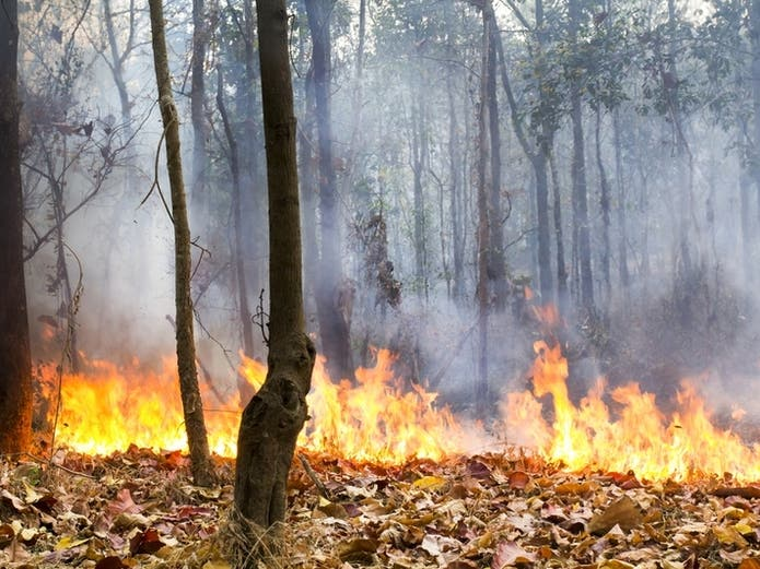 Wildfires Force Evacuations Road Closures Outages