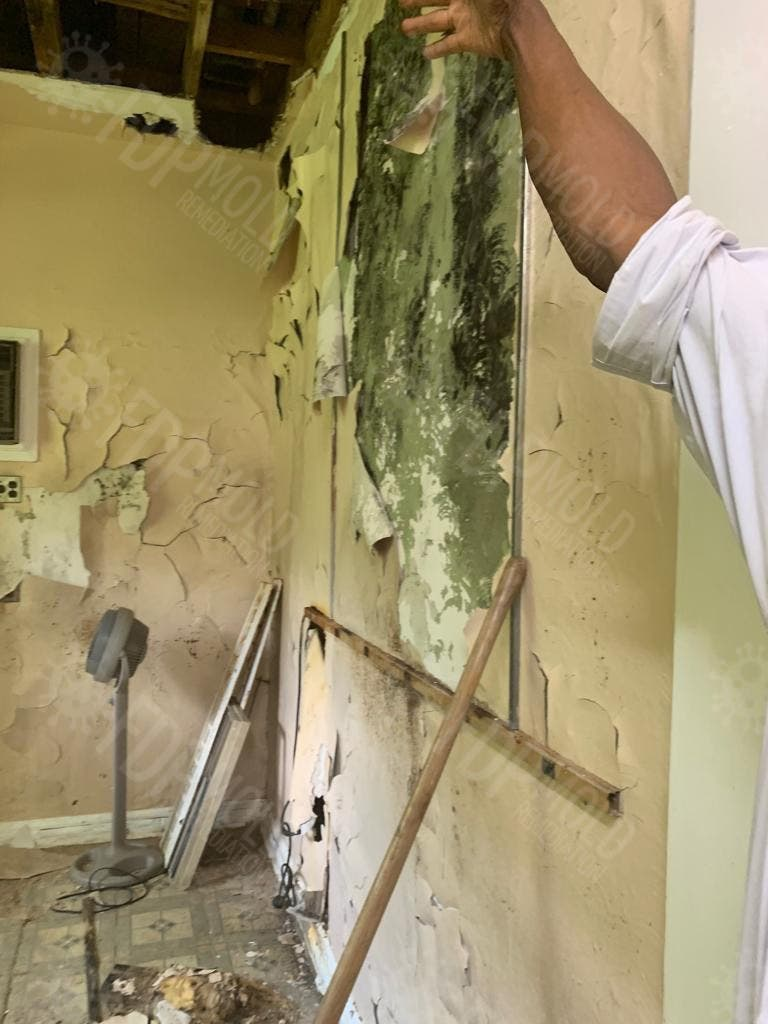 Mold Remediation Services - Miami, Boca Raton & Fort