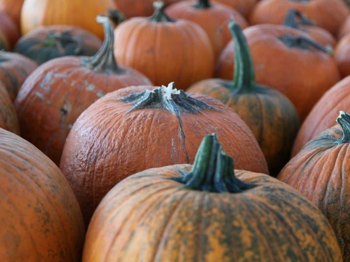 Halloween 2020 Annapolis Best Annapolis Area Pumpkin Patches 2020 | Annapolis, MD Patch