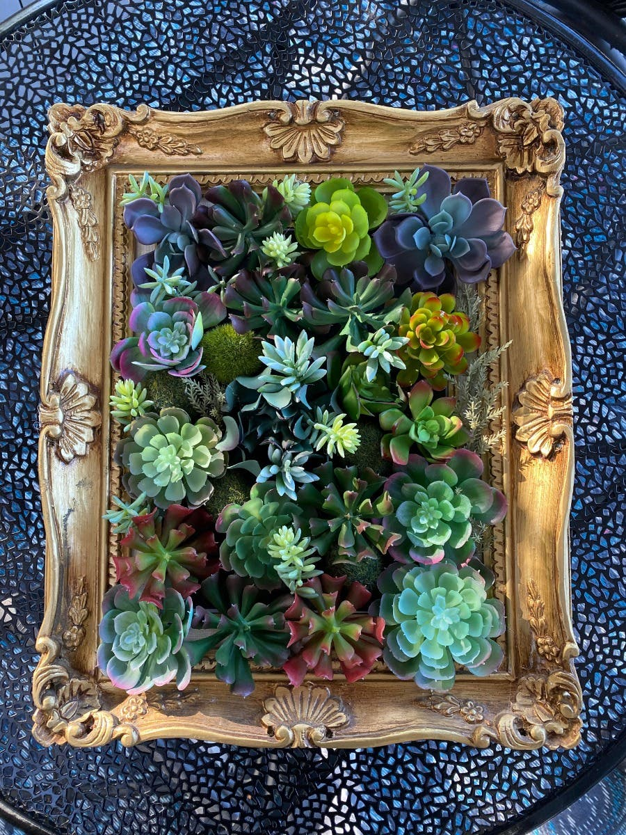 Succulent Wall Hanging Santa Cruz Ca Patch