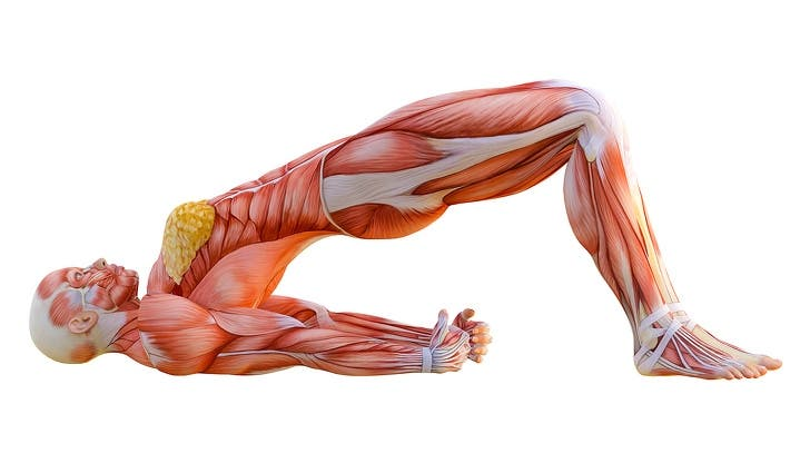 Stretching Exercises to Make You As Flexible As a Cat in 4 WeeK - Chelsea, NY Patch