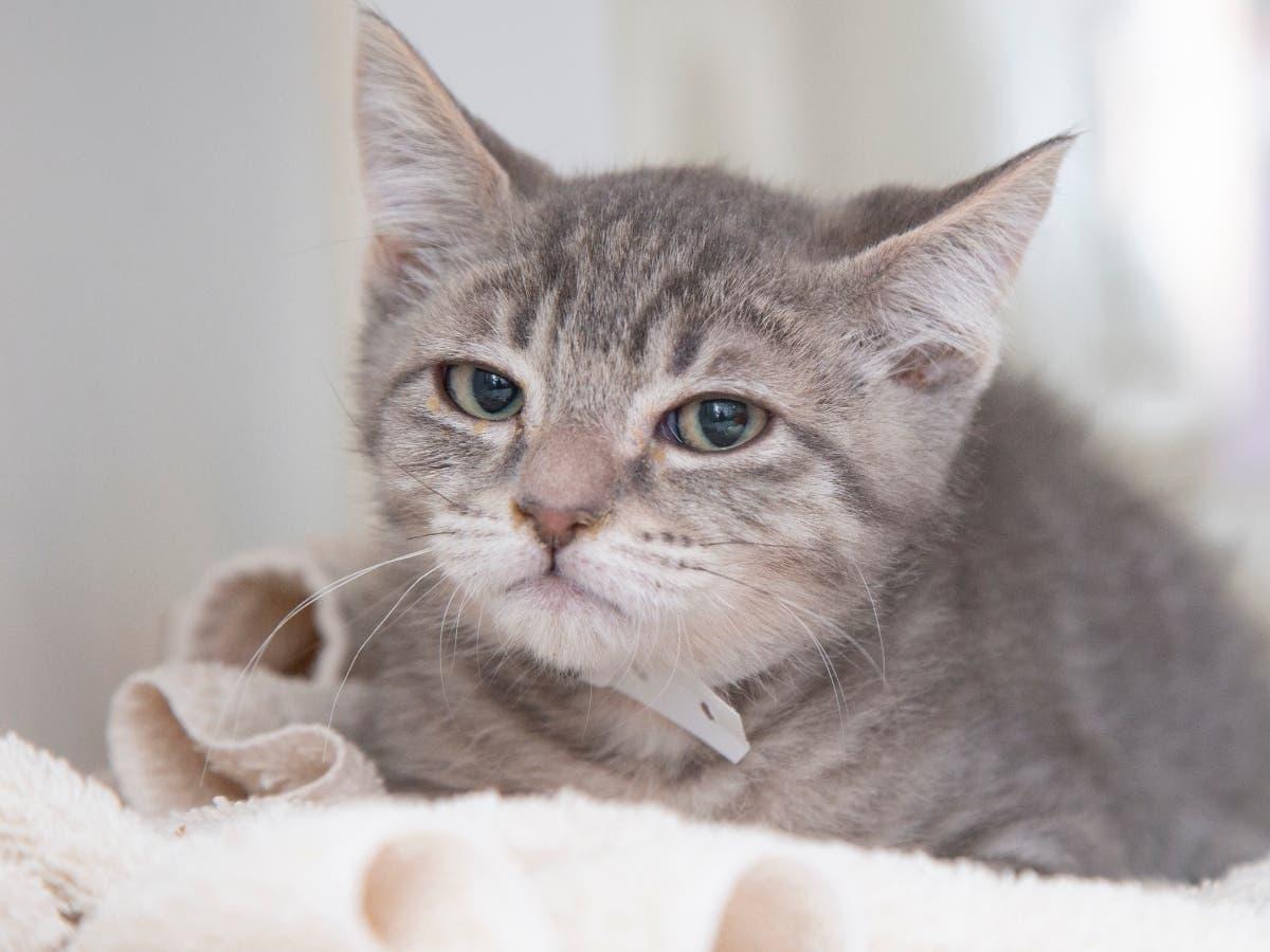 'Judgy Cat' Is Arizona's Newest Internet Cat Crush