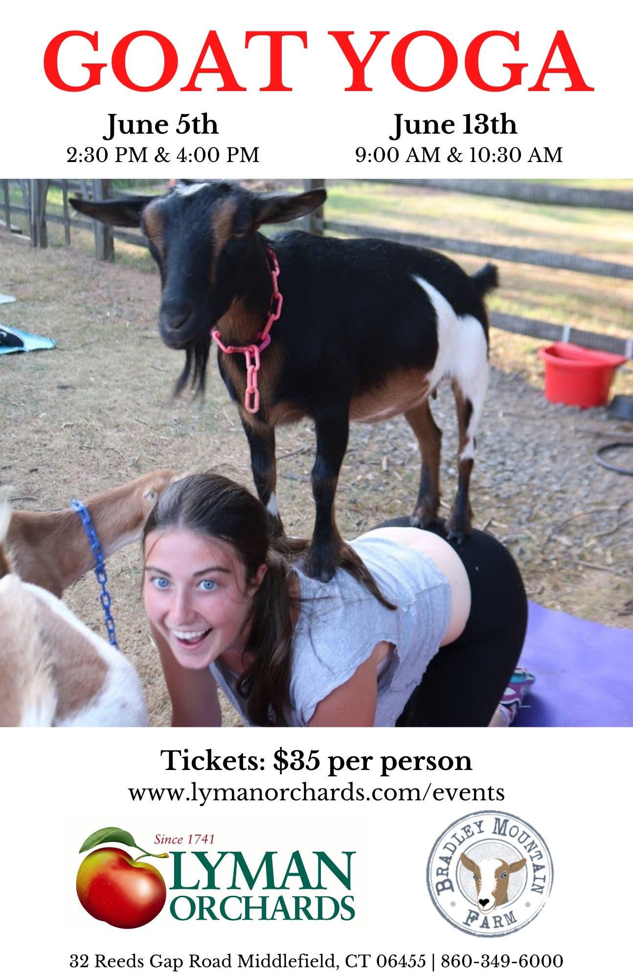 Goat Yoga @ Lyman Orchards