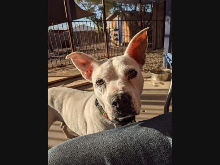 Phoenix Pets Up For Adoption: Meet Esperanza & More