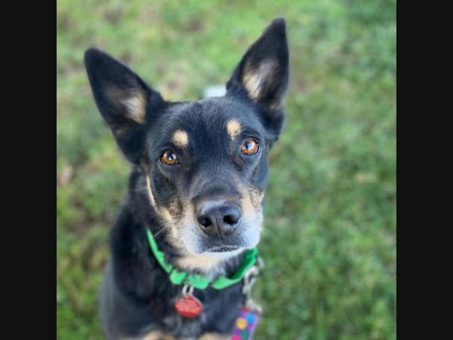 Latest Pets Up For Adoption At Fredericksburg Area Shelters Fredericksburg Va Patch