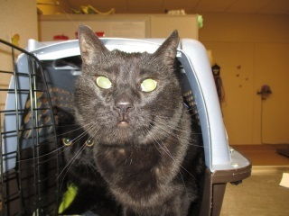 Lake Elsinore-Wildomar Pets Who Need A Home: Meet Salem, Shadow & More