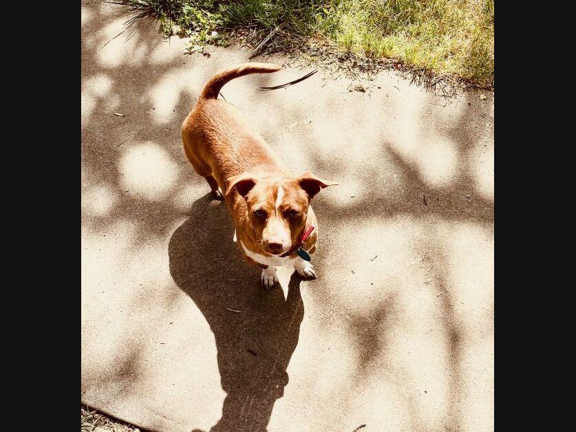 San Francisco Adoptable Pets: Meet Jake, Chato, Pollo & More