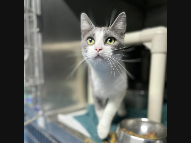 See The Latest Adoptable Pets At Roanoke Area Shelters