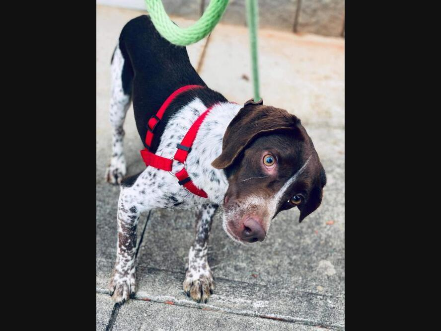 New York City Pets Up For Adoption