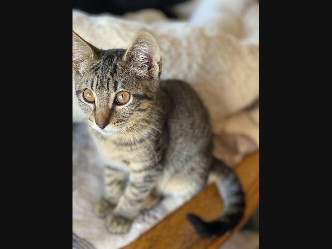 Santa Cruz Area Pets Who Need A Home: Cats, Chickens, More