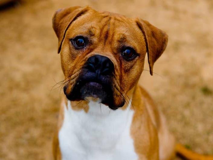 Meet LifeLines DeKalb County Pet of the Week: Trenton