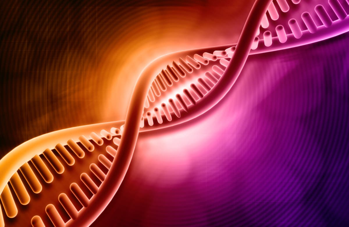 New Insight on Nuclear Organization of DNA and its Impact on