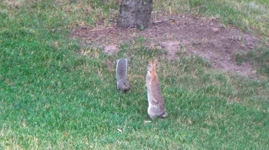 Our Pets Backyard Friends Bunny Fox Or Squirrel
