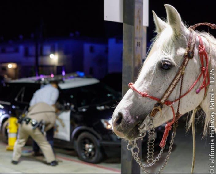 Allegedly Drunk Man Rides Horse Down Los Angeles Freeway