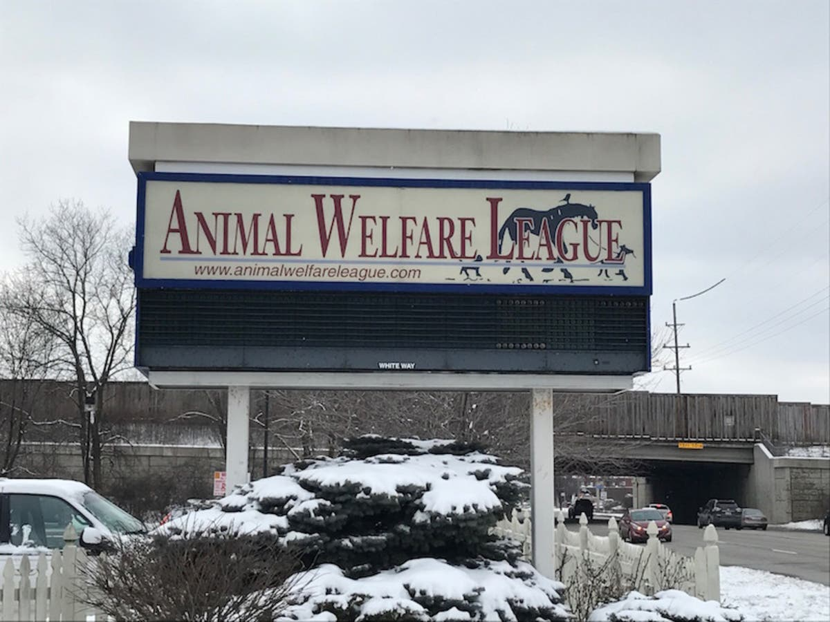 Animal Welfare League Director No Longer Employed At Shelter Oak Lawn Il Patch
