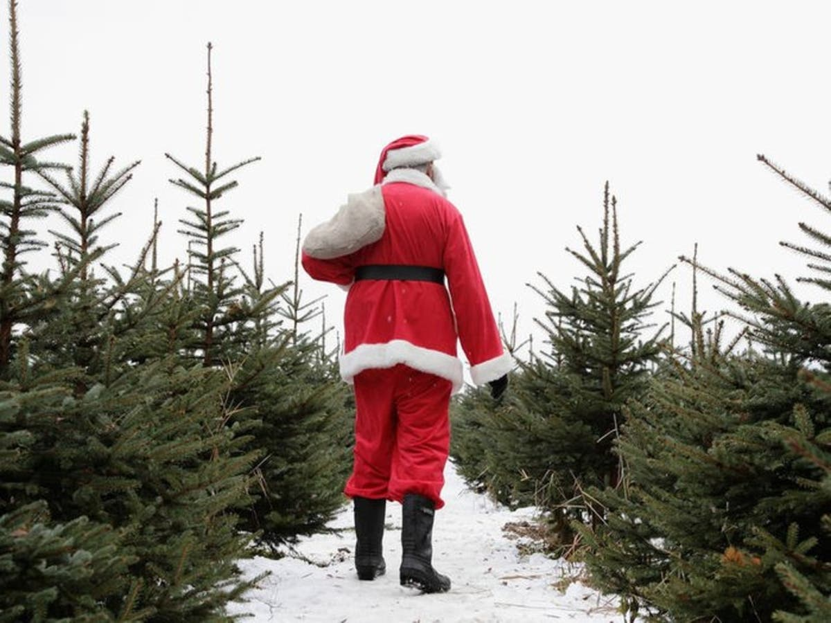 Cut Your Own Christmas Tree Near Me.Where To Cut Down Your Own Christmas Tree Near Chicago